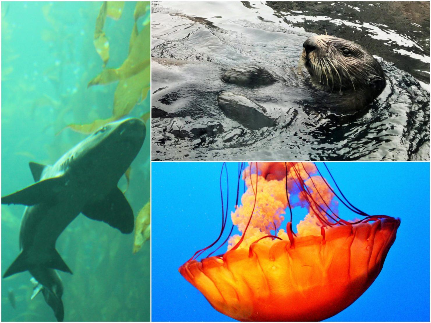 Monterey Bay Aquarium mit Kindern - Familienreise durch die USA