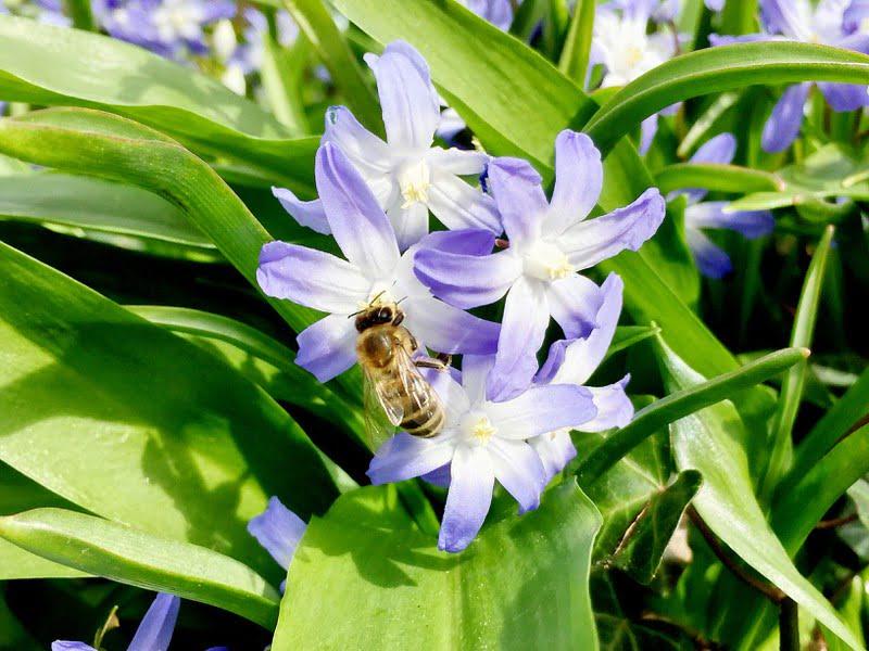 Bienen an der Arbeit