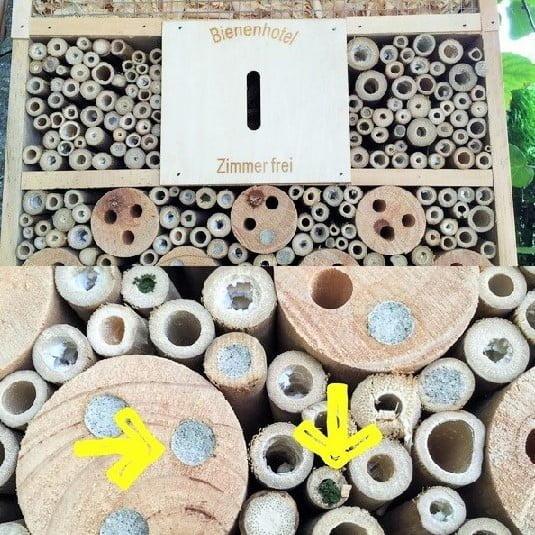 Das Bienenhotel