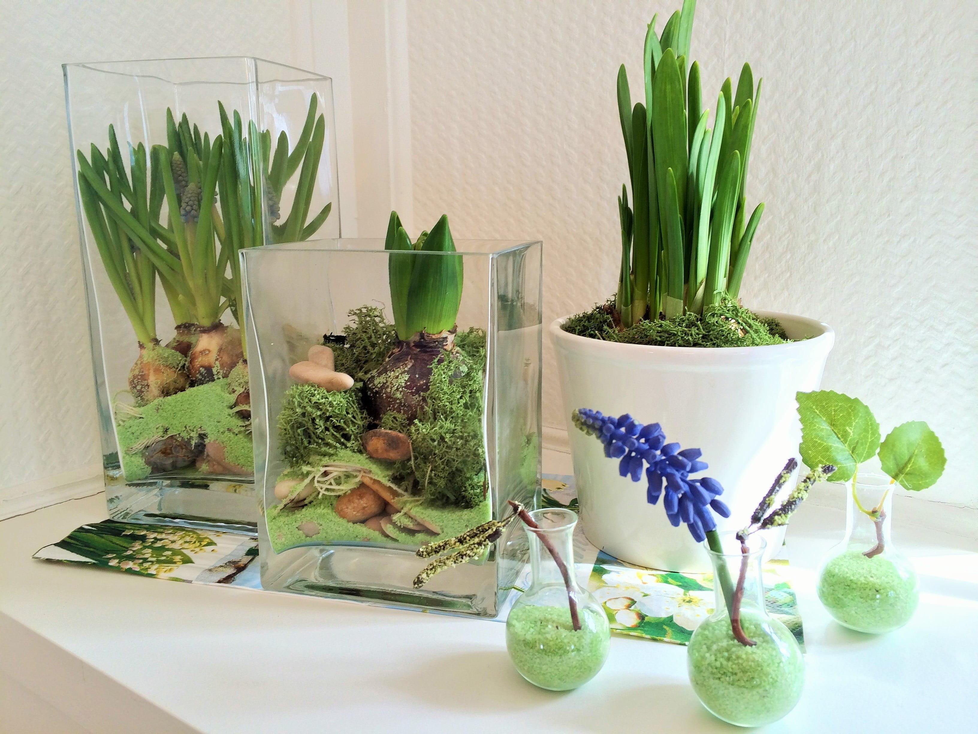 Der Vorfruhling Auf Der Fensterbank Wir Lassen Blumen Vortreiben