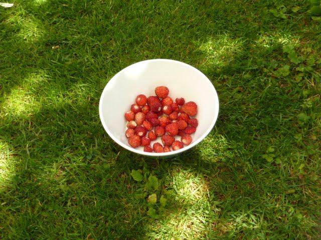 was lange w hrt wird endlich gut die erdbeeren sind da die angelones der ehrliche und. Black Bedroom Furniture Sets. Home Design Ideas