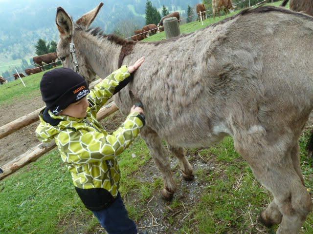 Eselswanderung im Toggenburg