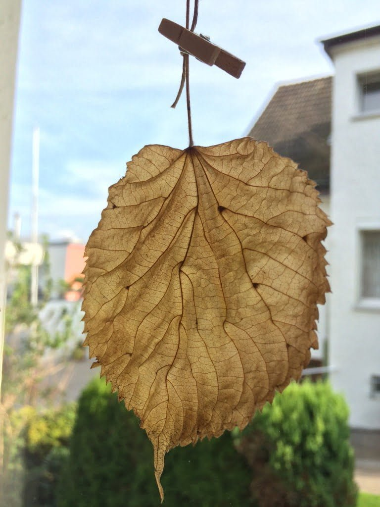 Hängende Herbstblätter