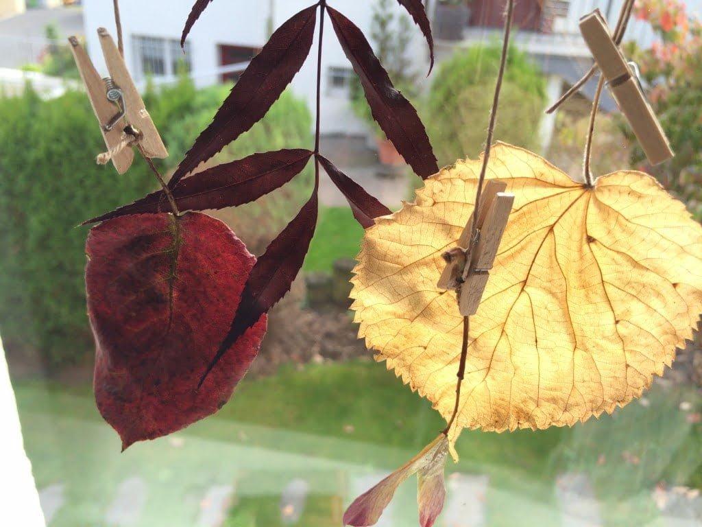 Zauberhaft schön: Hängende Herbstblätter fürs Fenster basteln