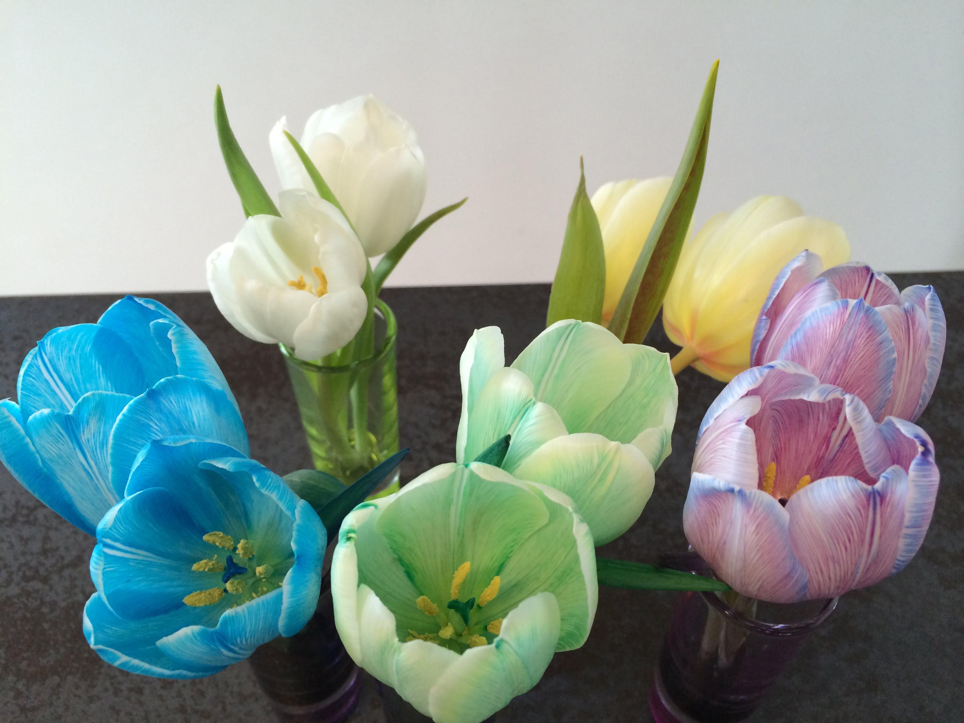 Zweiter Versuch: Experiment Tulpen färben | Die Angelones – der ...