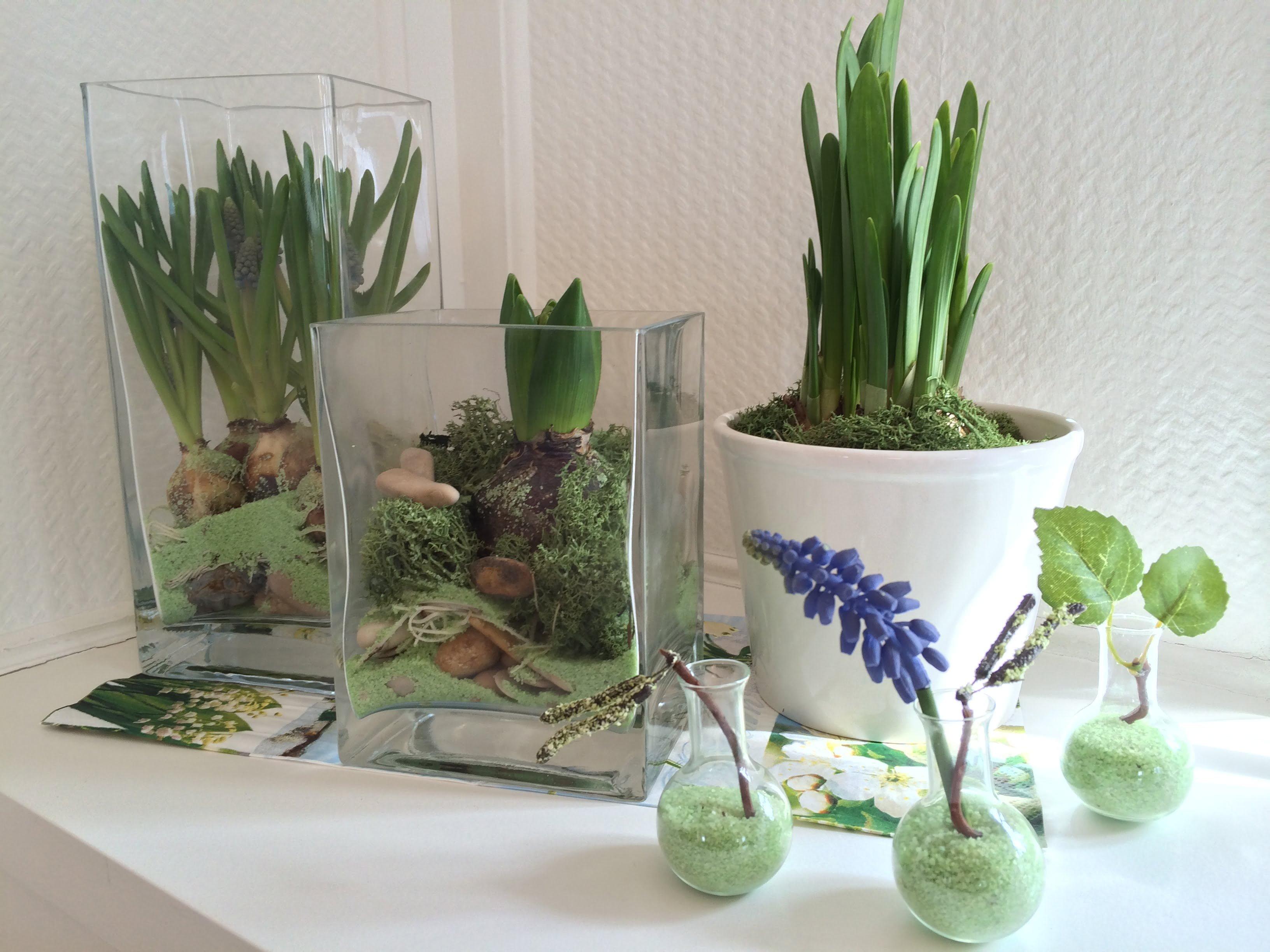 biologiestunde in der stube blumenzwiebeln im glas die angelones der ehrliche und n tzliche. Black Bedroom Furniture Sets. Home Design Ideas