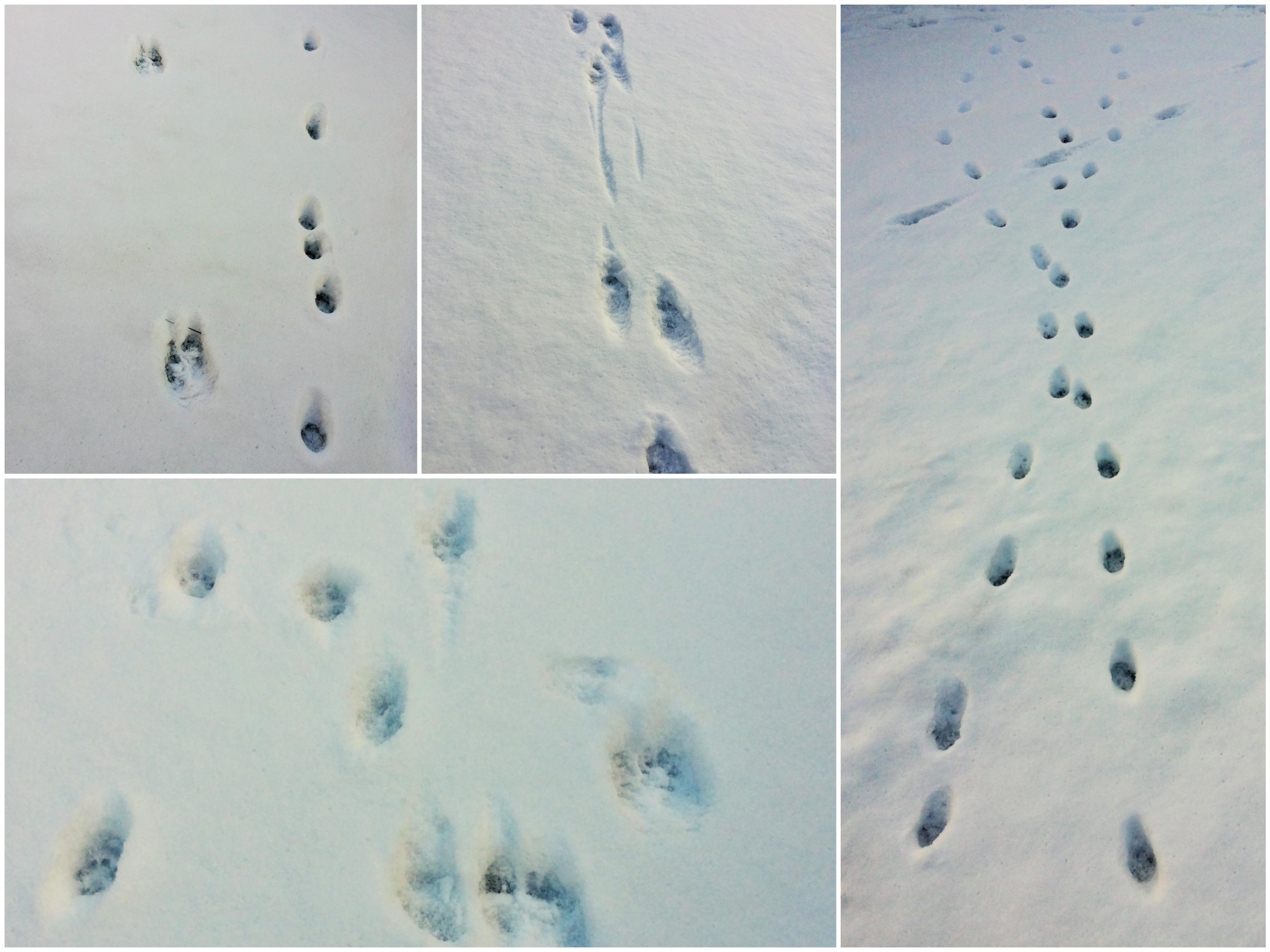 spuren im schnee: in unserem garten geht die post ab! - familienblog