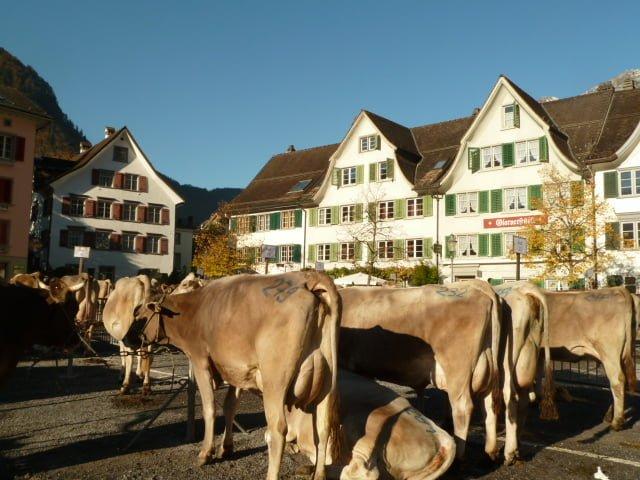Mit Kindern an der Viehschau in Glarus