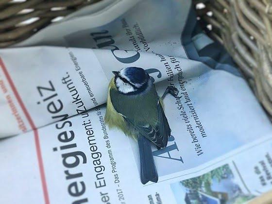 Verletzter Vogel: Verhaltensregeln