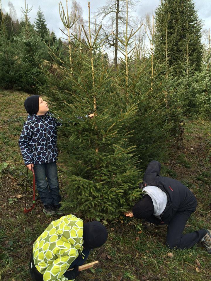 Weihnachtsbaum im Holzwürfel