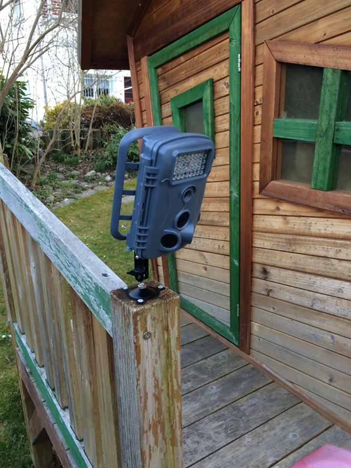 Wildkamera: Beobachtungsposten im Garten